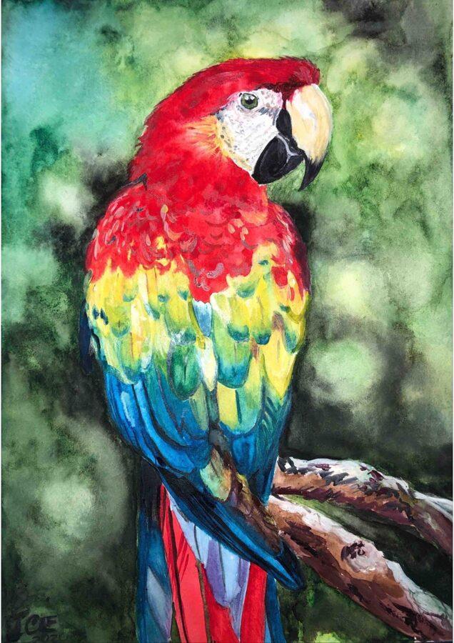 """D.Rudāne - glezna """"Red Macaw"""""""